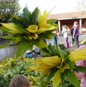 Élagage du platane de la cour de l'école de Bommes-33, ou comment les élèves rebondissent... artistiquement.